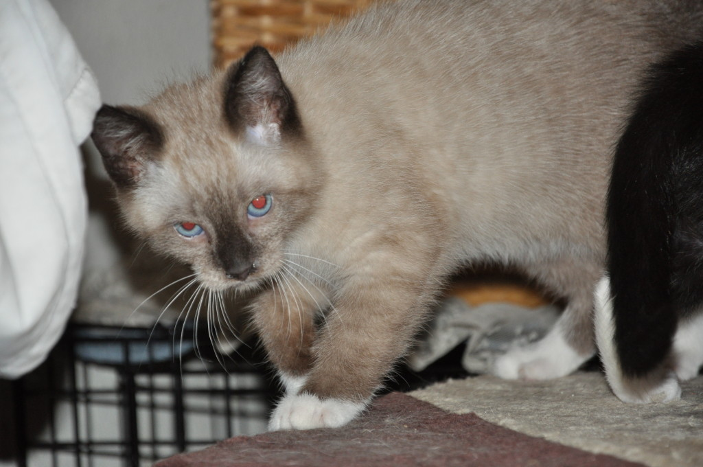 Daisy - rescue kittens recuperating