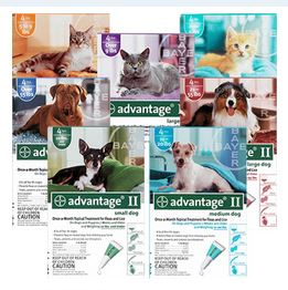 save money on flea treatment
