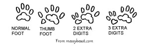 polydactyl graphic copy