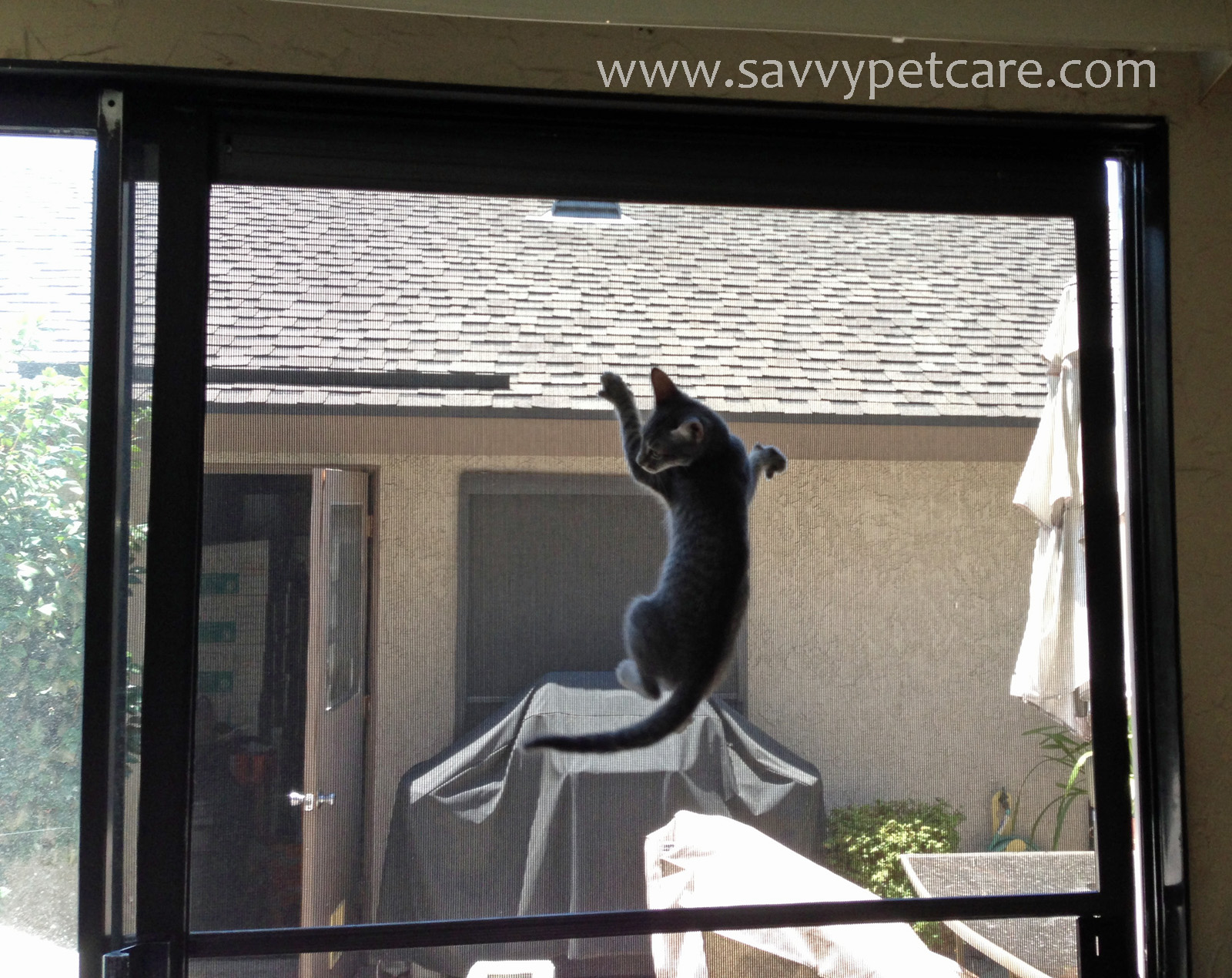 naughty kitten climbing screen