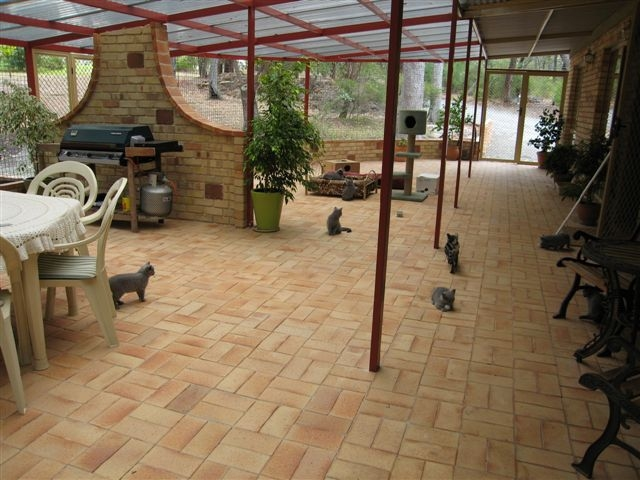 Gallery For Outdoor Cat Enclosure