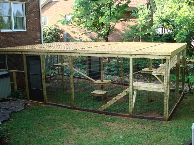 Outdoor Cat Enclosures Getting Cats Outside Safely