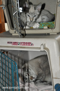 Cats in crates