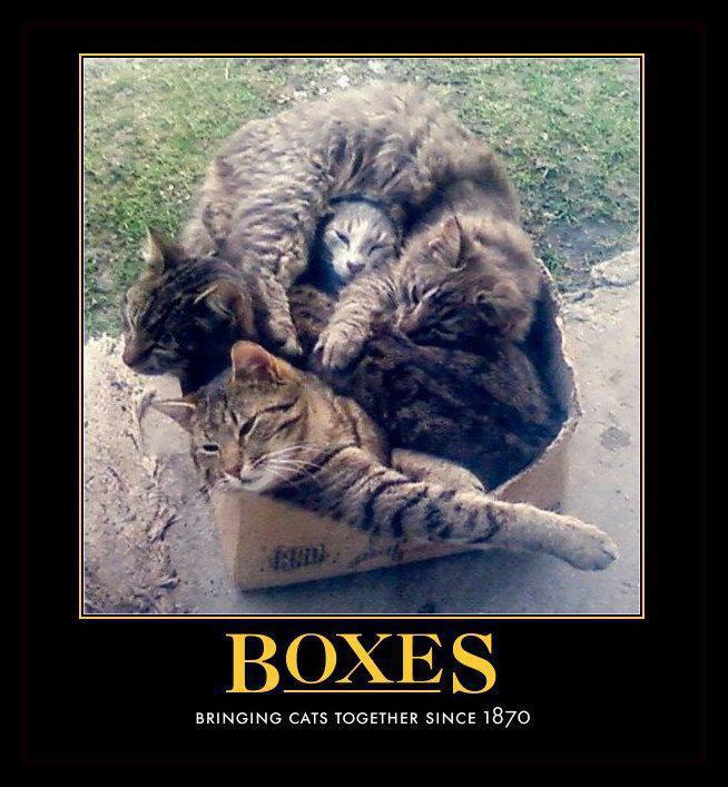 Cats in a box - boxes