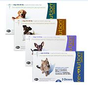 save money treating fleas with Revolution