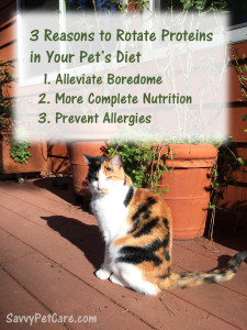 The 3 Reasons to rotate proteins in your pet's diet