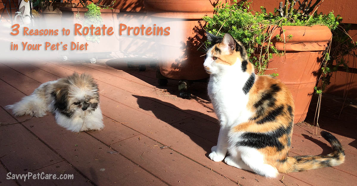 If you rotate proteins in your pet's diet, it will help your pet live a longer, healthier life. Here are the three main reasons why.