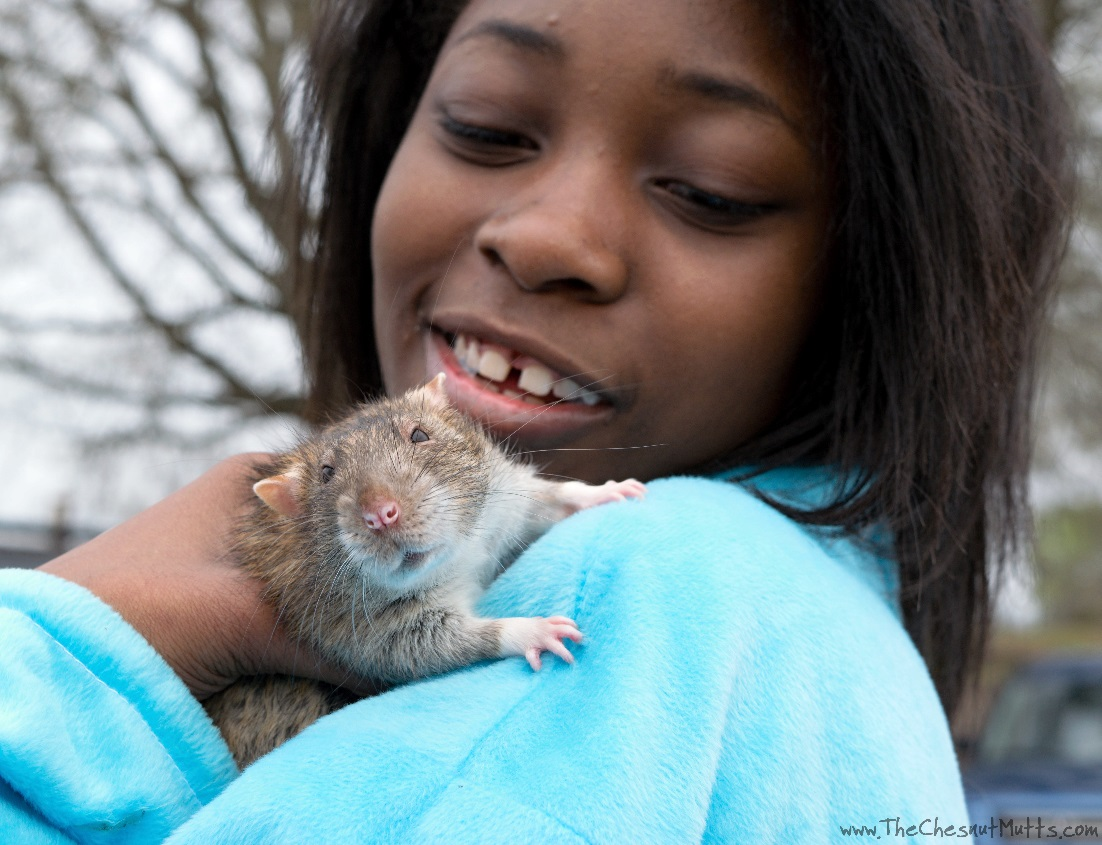 Pet rat Delmar being held by a young female attendee at the pet parade