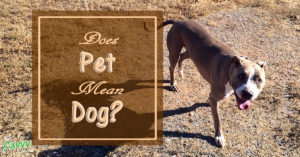 Pet Peeve: Pet Does Not Mean Dog