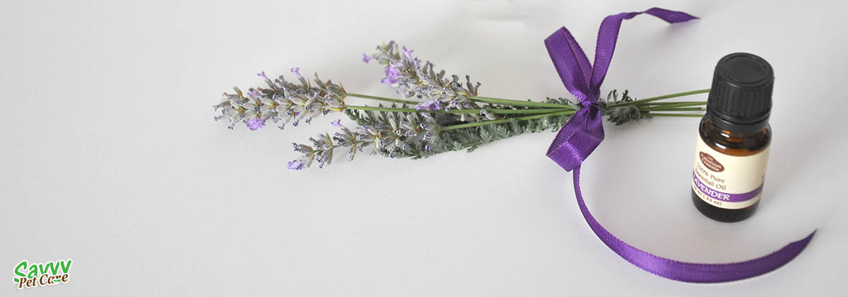Lavender bunch and oil