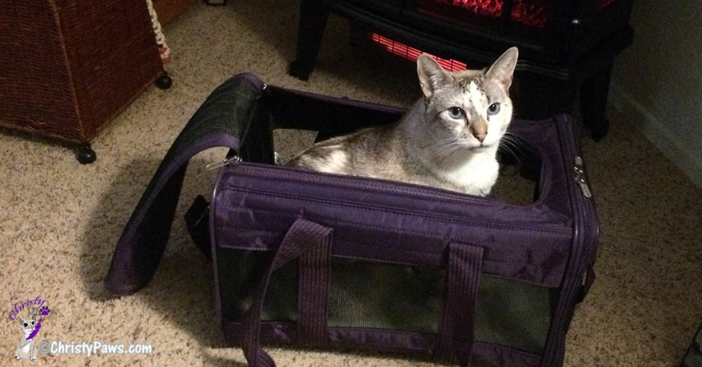 Sherpa soft-sided carrier from Savvy Pet Care's pet lovers gift guide