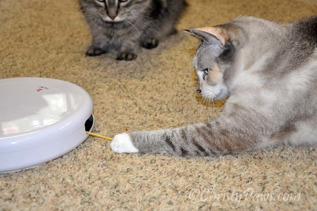 FroliCat Flik from Savvy Pet Care's Pet Lovers Gift Guide
