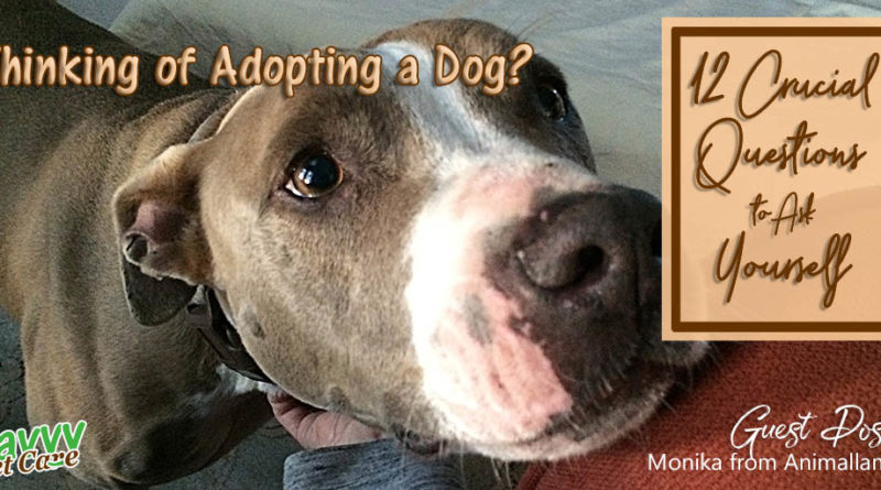 Dogs are not all play -- they require effort to keep them happy and healthy. This guest post by Monika of Animallama gives you lots of things to consider before making a decision about adopting a dog.
