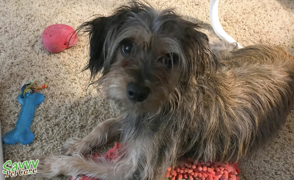 Dog with toys - expenses involved in adopting a dog