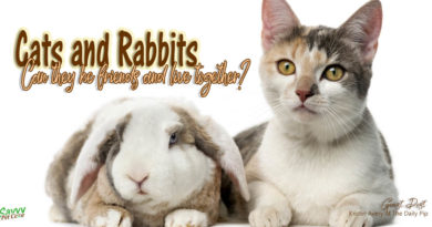 Rabbit meets cat title graphic photo credit Eric Isselee/shutterstock.com