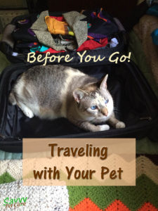 Traveling with your pet - cat in suitcase