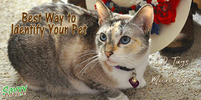 What's the Best Way to Identify Your Pet?