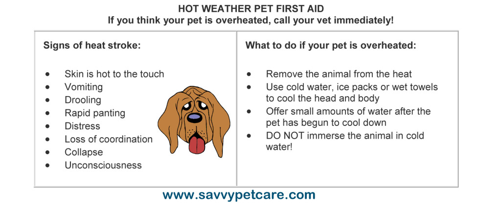 HOT WEATHER PET FIRST AID