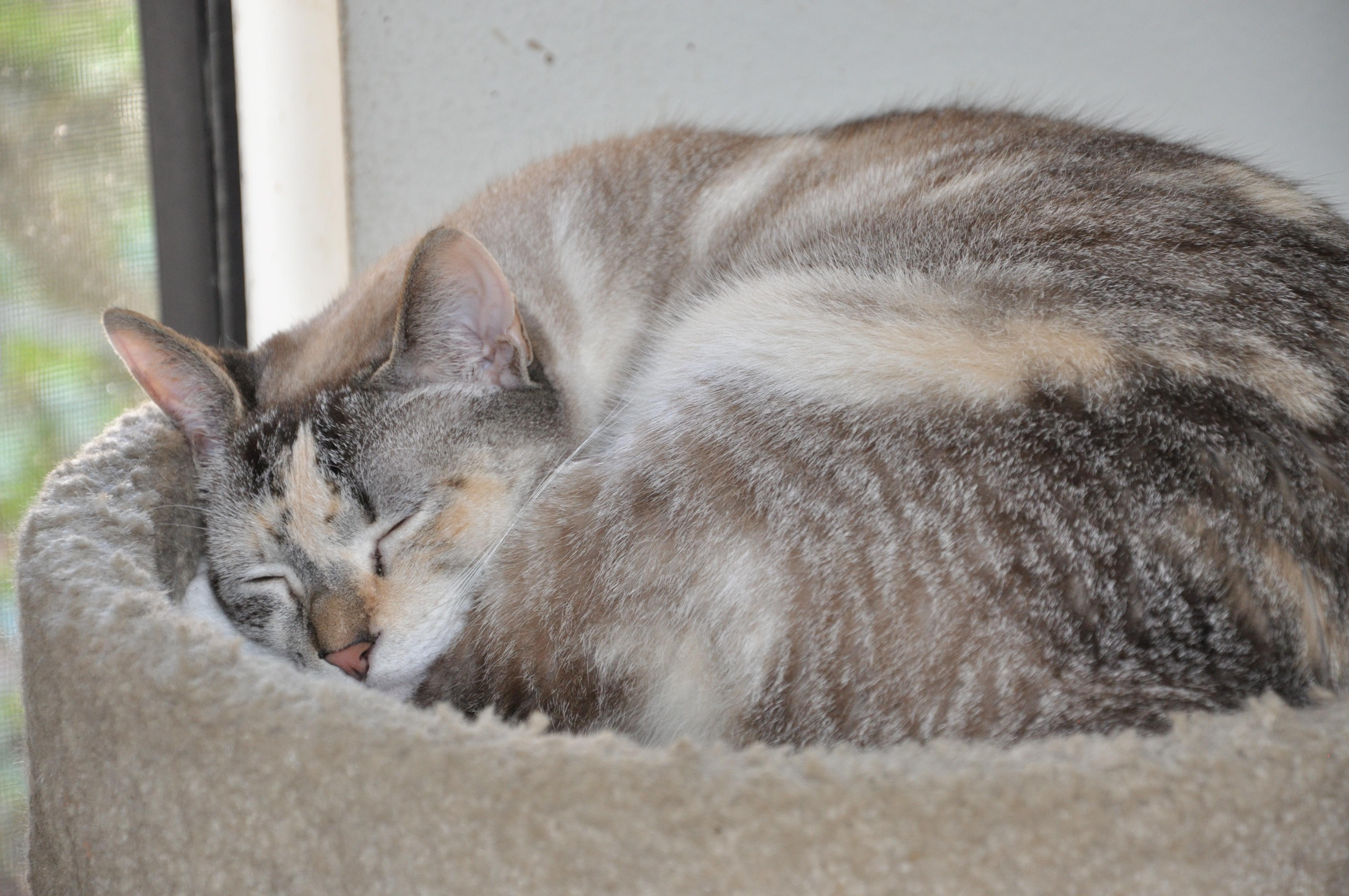 Wordless Wednesday - Sleeping Cats