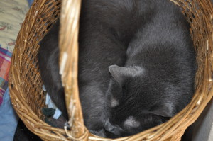 Sleeping cats - Russian blue mix