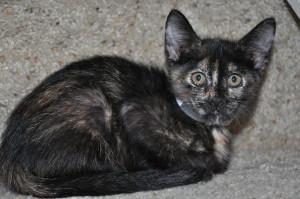 recuperating sick kitten Diamo