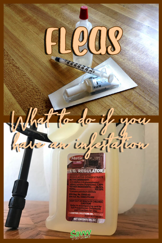 flea medication and insect growth regulator with text overlay: Fleas what to do if you have an infestation