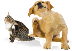 scratching can be the first sign of a flea infestation