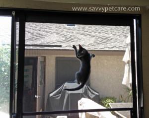 naughty kitty climbing on screen