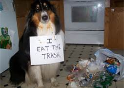 garbage scavenging dog