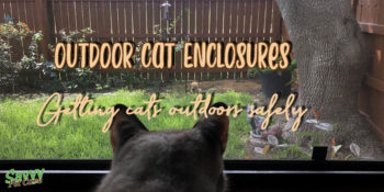cat looking out window at squirrel with text overlay: Outdoor cat enclosures Getting cats outdoors safely