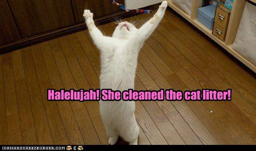 clean cat litter