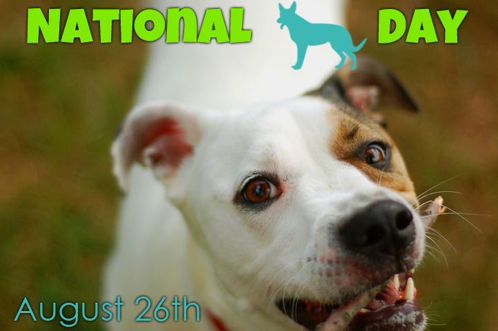 National Dog Day - Animal Miracle Network - Colleen Paige