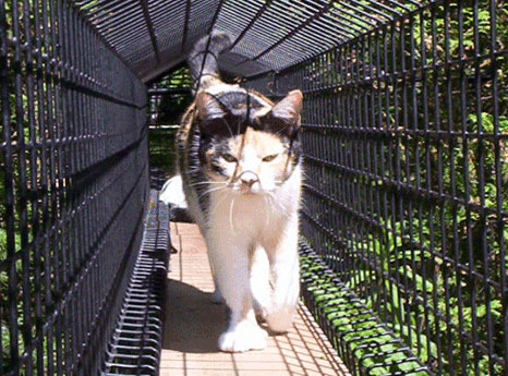 Outdoor Cat Enclosure Tunnel