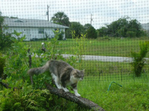 outdoor cat fencing