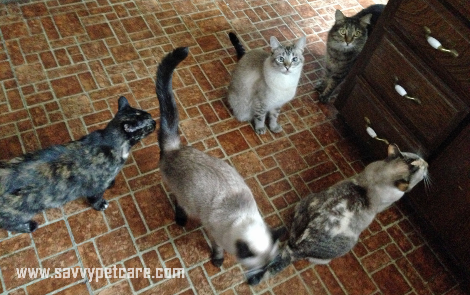 Gathering for their favorite treat -- raw chicken