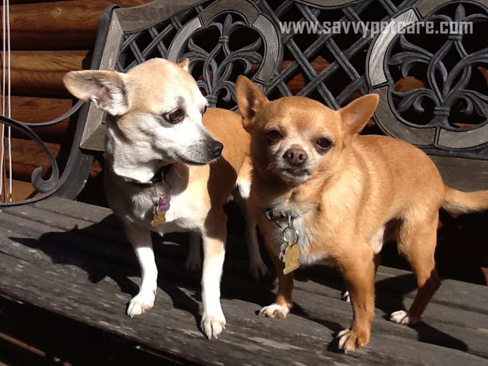 Our friends Shortcake and Jack who live in Plymouth, CA