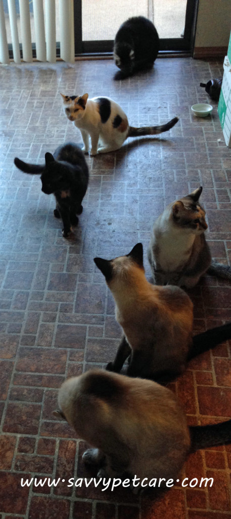 Raw Diet for Cats: How a raw diet can affect behavior