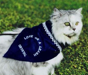 love on a leash therapy cat