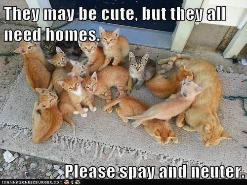 Find a Low Cost Spay/Neuter Clinic or Program