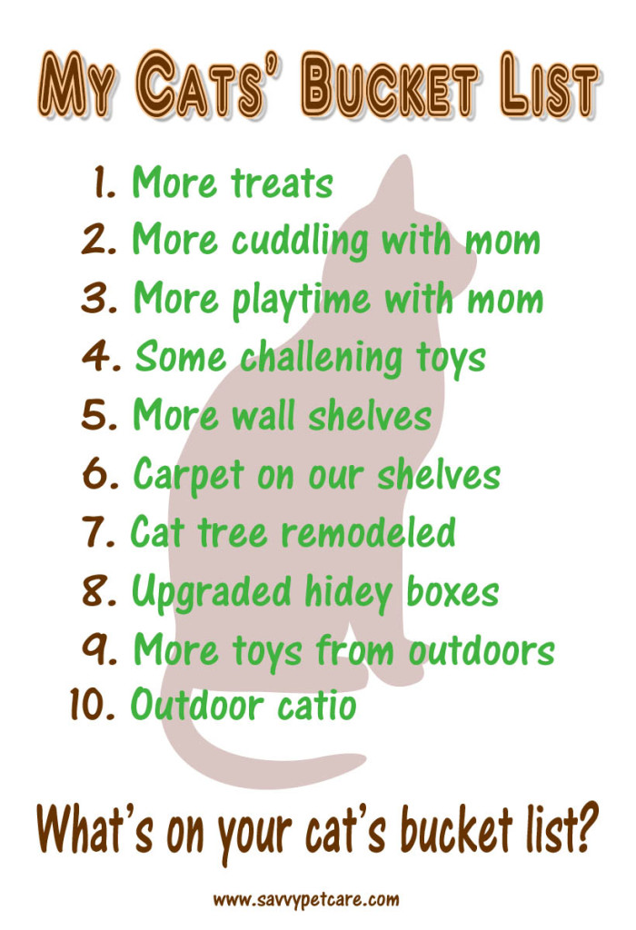 My Cats' Bucket List with lots of things for environmental enrichment