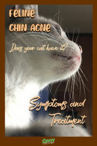 close up of cat's chin showing chin acne with text overlay: Feline Chin Acne, does your cat have it? Symptoms and Treatment