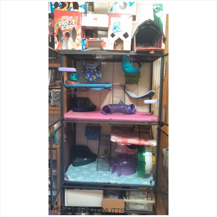 Double Critter Nation Rat Cage