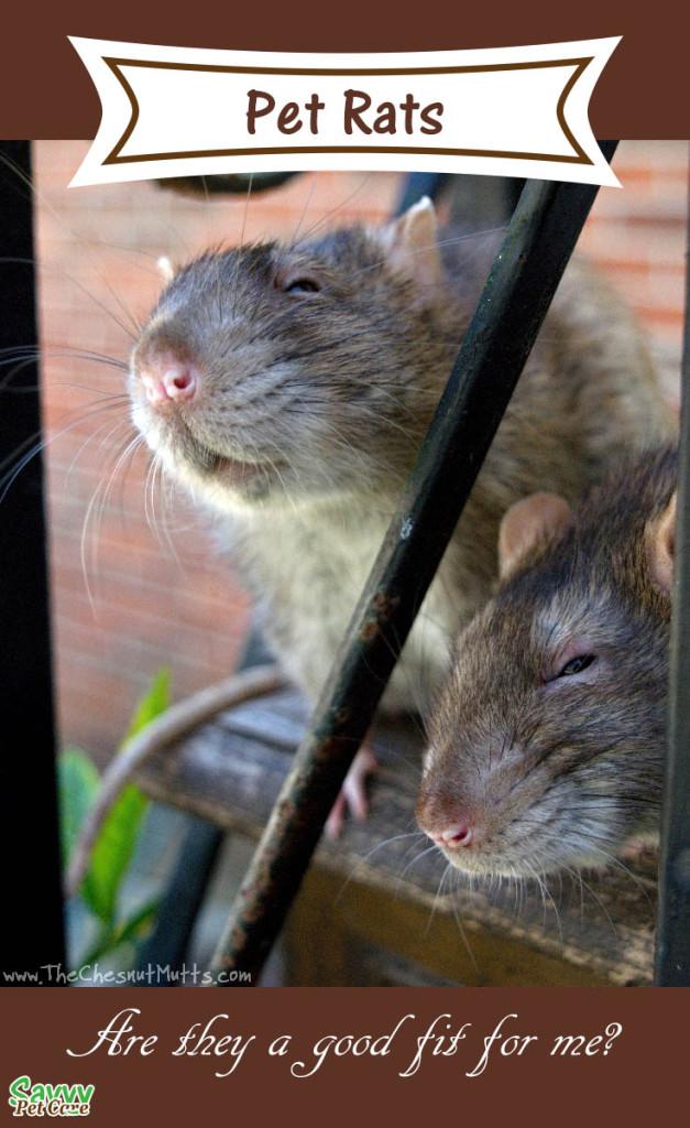 Pet rats, brothers Delmar and Everett