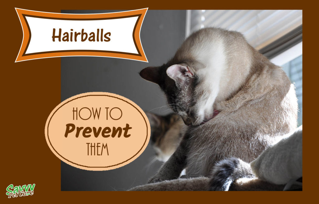 Hairballs, how to prevent them. Photo of cat grooming.