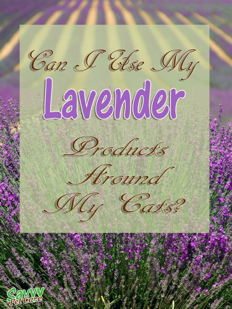 I wanted to know, is lavender toxic to cats? If it is classed as toxic to cats, what exactly does that mean? Is lavender safe to use around my cats? Check out this post for the answer to these questions and more.