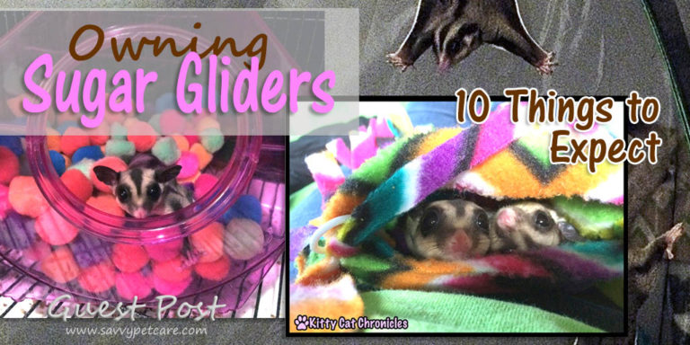 10 Things to Expect When Owning Sugar Gliders