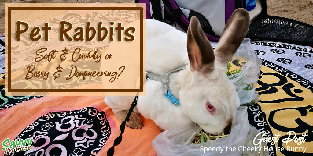 Pet Rabbits: Cute and Cuddly or Bossy and Domineering