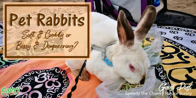 Pet Rabbits: Cute and Cuddly or Bossy and Domineering?