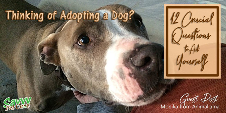 Adopting a Dog? 12 Crucial Questions to Ask Yourself