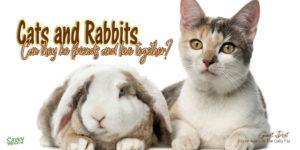 Rabbit meets cat title graphic photo credit Eric Isselee/shutterstock.com